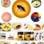baits-kill-german-russian-american-australian-cockroach-medicine-insecticide-cockroach-killer